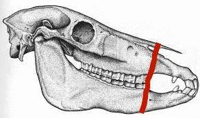 Skeletal view of Bosal Fitting