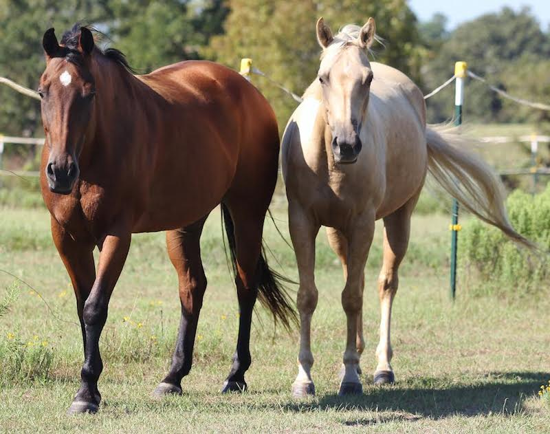 brick and belle equine herb program testimonial