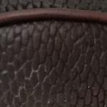 Closeup of Beaver Tail