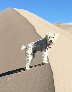 Sand Dune Dog